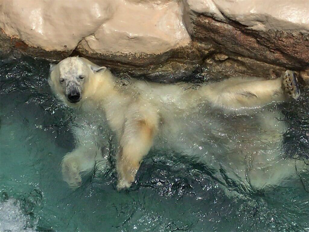 動物との距離が近いいいぃぃ! 静岡市の日本平動物園で癒やされてきました!